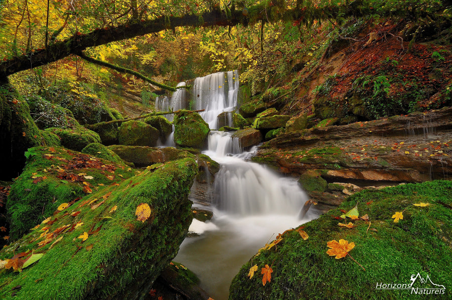 Photograph Secret forest by Horizons Naturels | Team of french photographers  on 500px