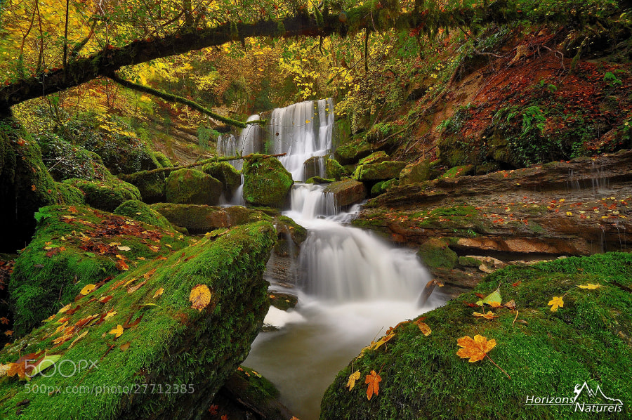 Photograph Secret forest by Horizons Naturels   Team of french photographers  on 500px