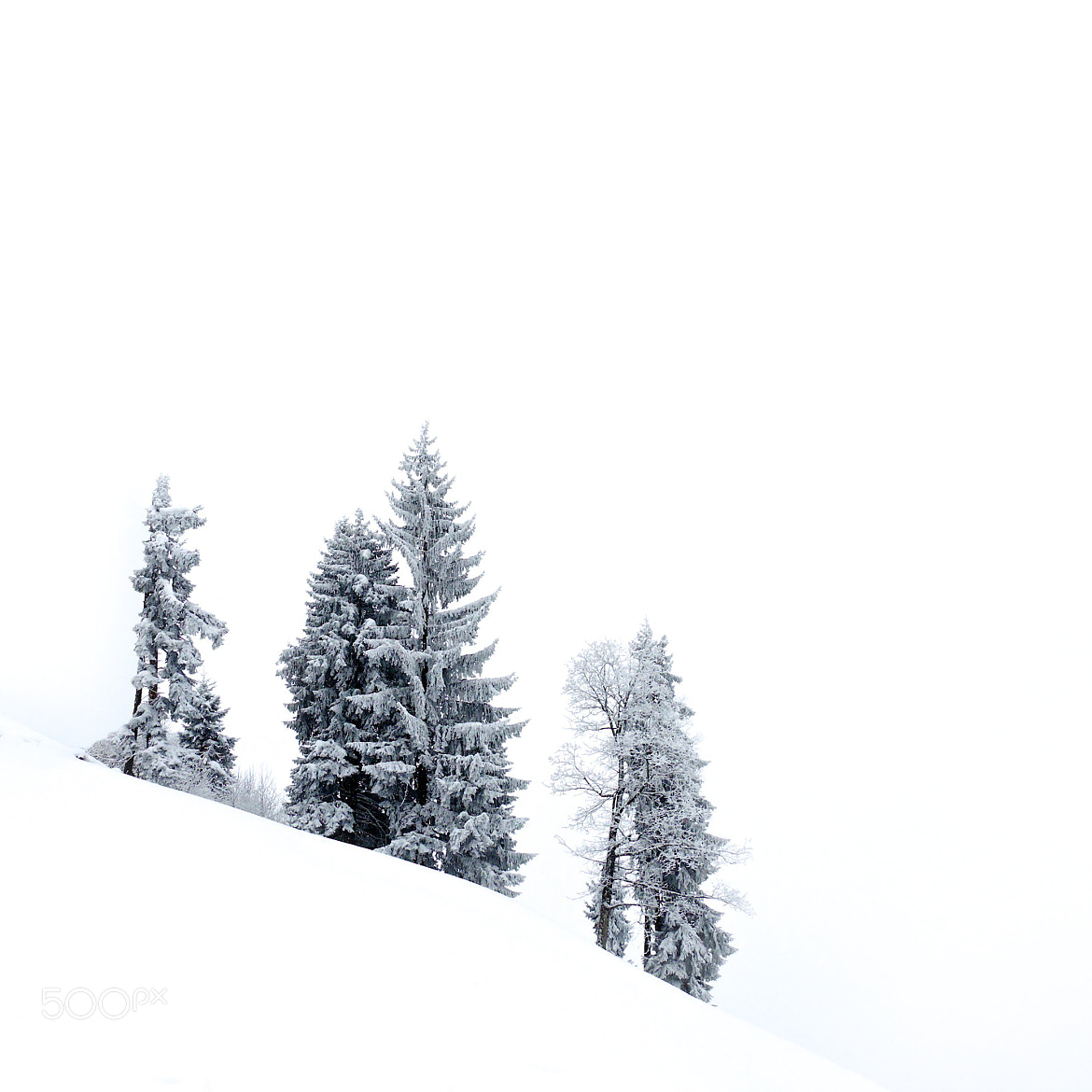 Photograph White Out by Martijn van der Nat on 500px