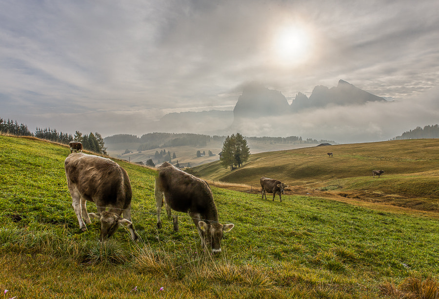 This photo was taken on the last morning of the Dolomites October 2012 photo workshop.  This is an HDR  image created using the Photomatix 32bit HDR plugin for Lightroom. The tone mapping was done in Lightroom 4.4RC. 7 bracketed shots 1 stop between them were used.
