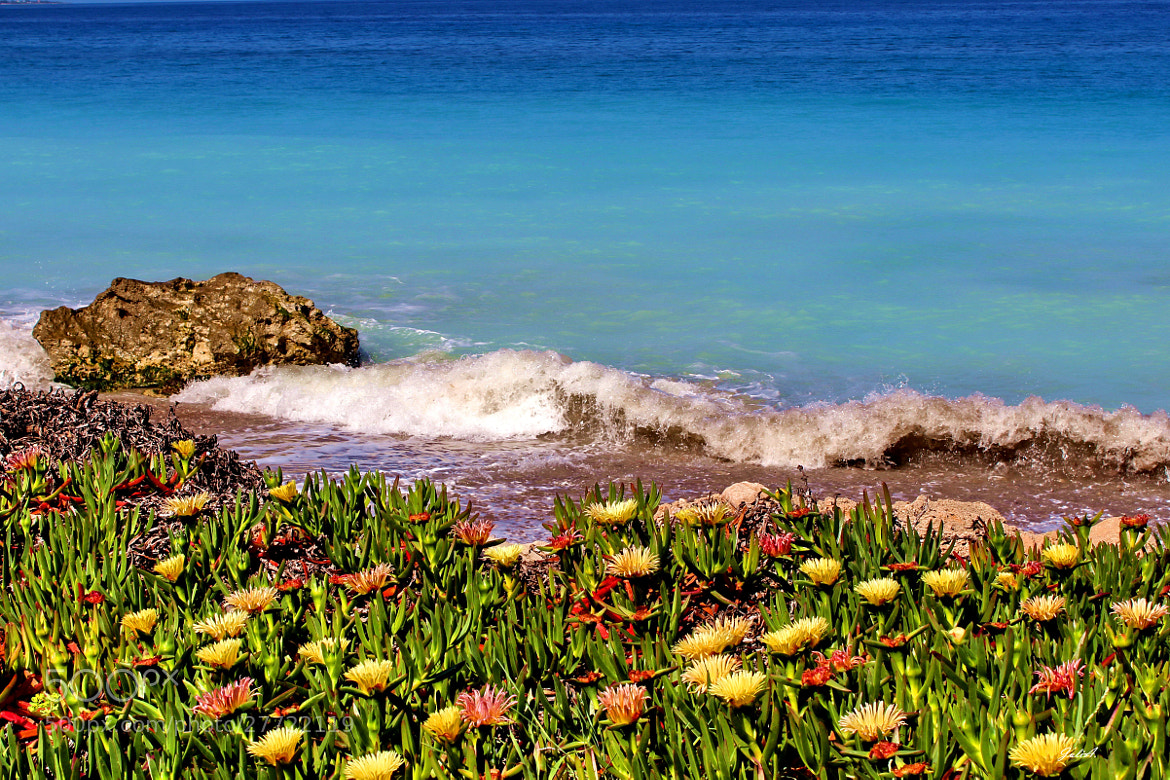 Photograph  Turquoise wild flowers and waves by Julia Fine Art © Julia Apostolova on 500px