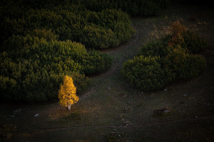 Gold, автор — Vincent Favre на 500px.com