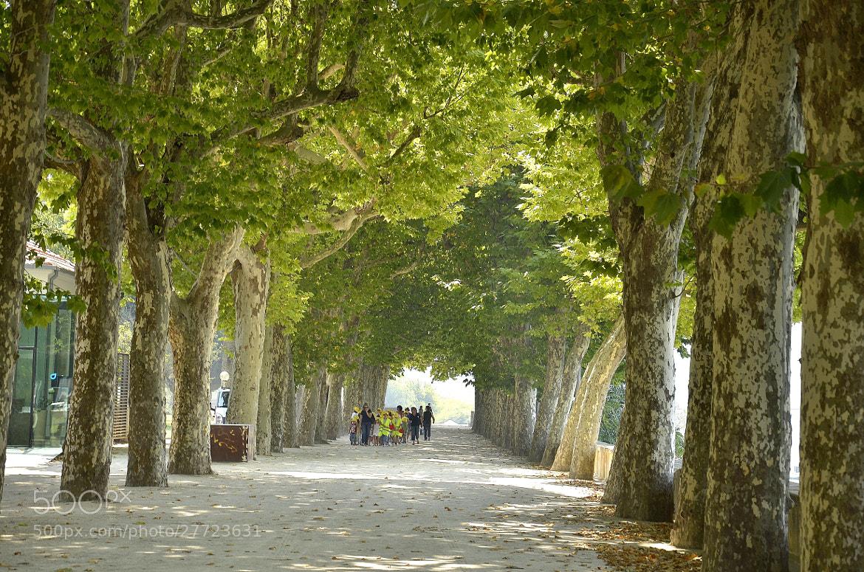 Photograph paseo por el parque by Justo Gonzalez on 500px