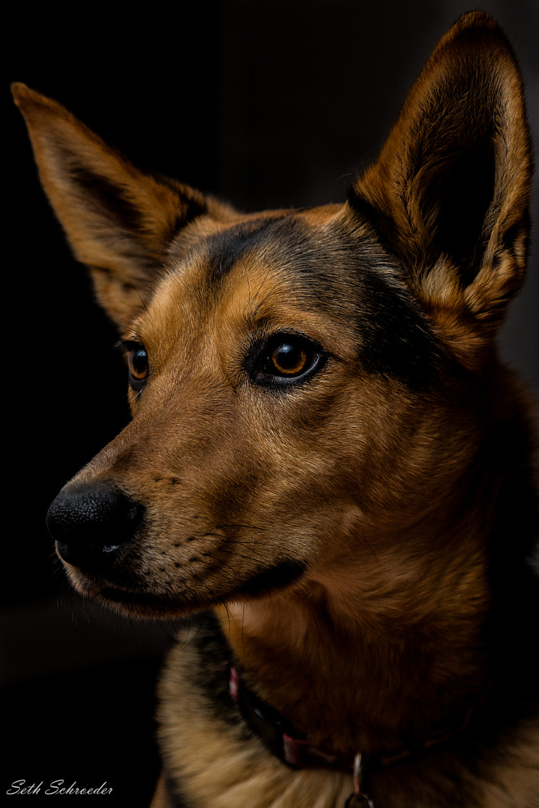 Photograph canine portrait by Seth S. on 500px