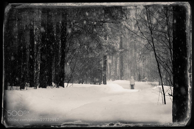"""Photograph """"Sossnovka"""" park by Stanislav Uramer on 500px"""