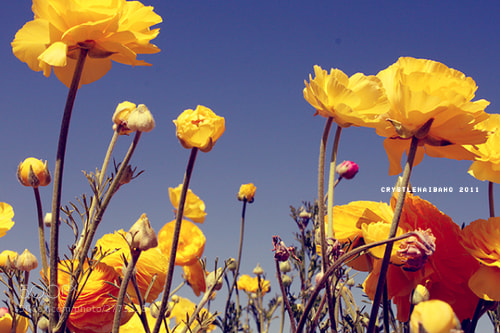 Photograph Carlsbad Flowers by cuistle thebeat on 500px