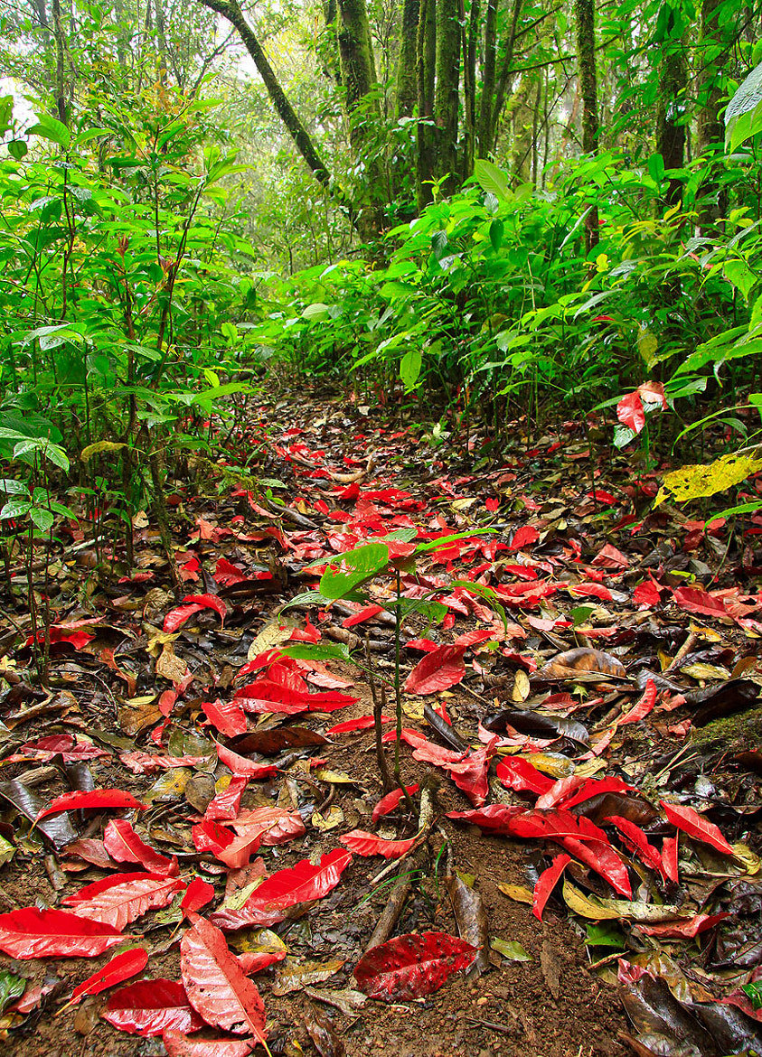 Photograph Natural  Red  Carpet by ทิวทิวา ภูตะวัน on 500px
