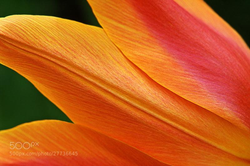 Photograph  The Colour of Spring by Aleksandar Vasic on 500px