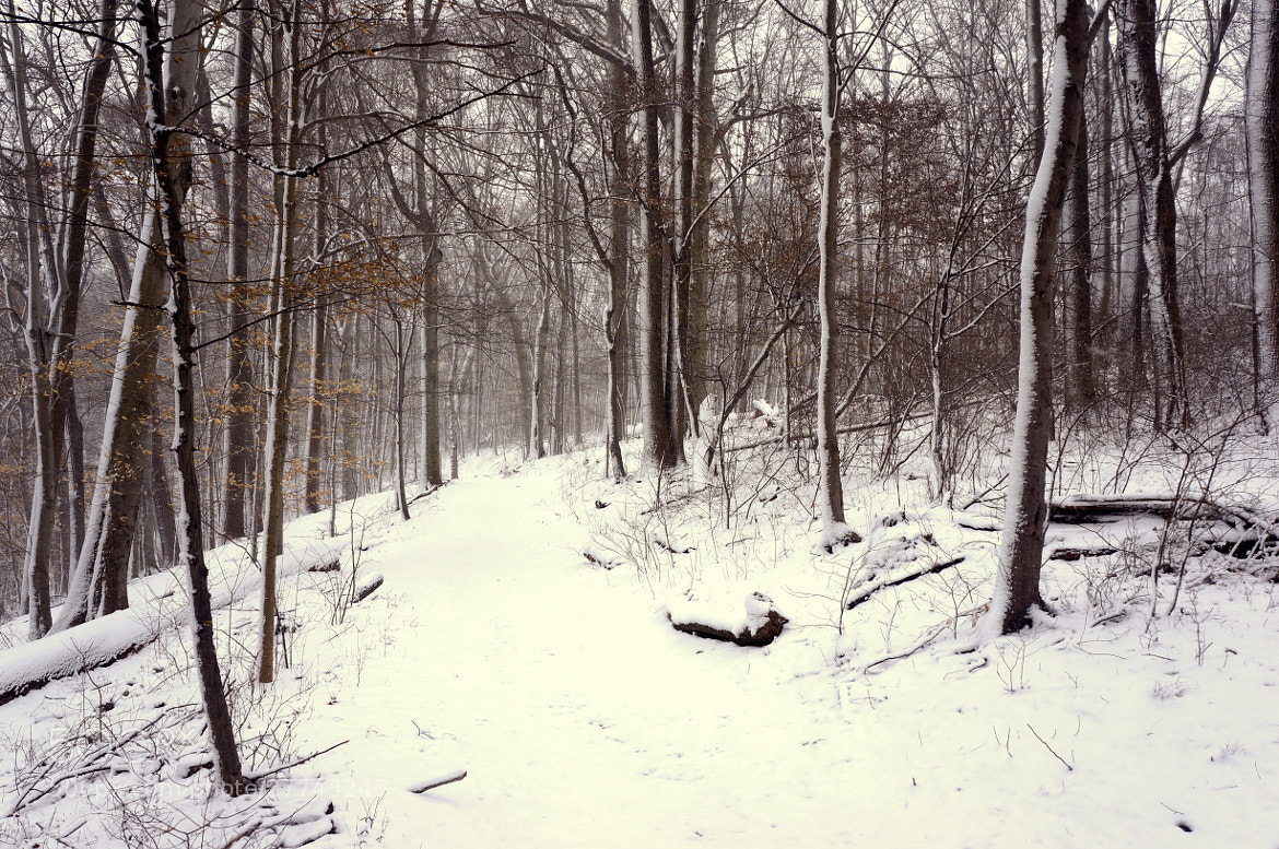 Photograph Snowy Trail by Allan Cabrera on 500px