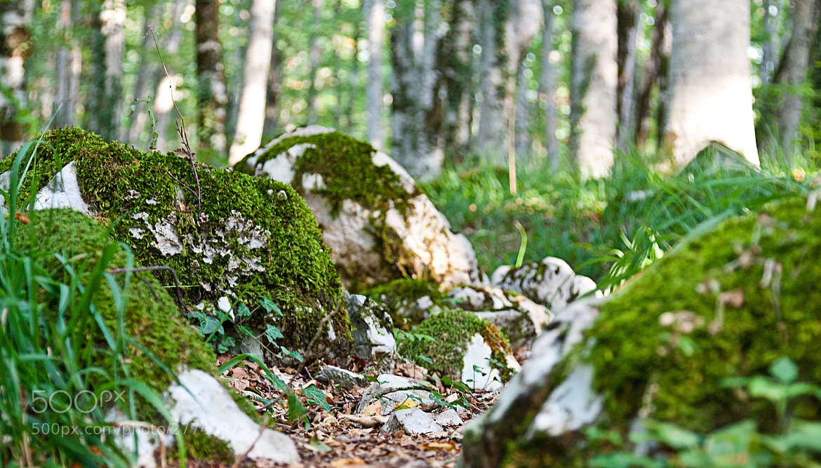 Photograph Stone in the forest by Alexandra Brovko on 500px