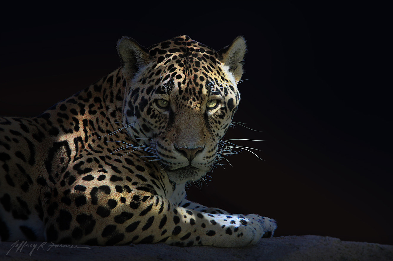 "Photograph ""Jaguar Portrait"" by Jeffrey R. Farmer on 500px"