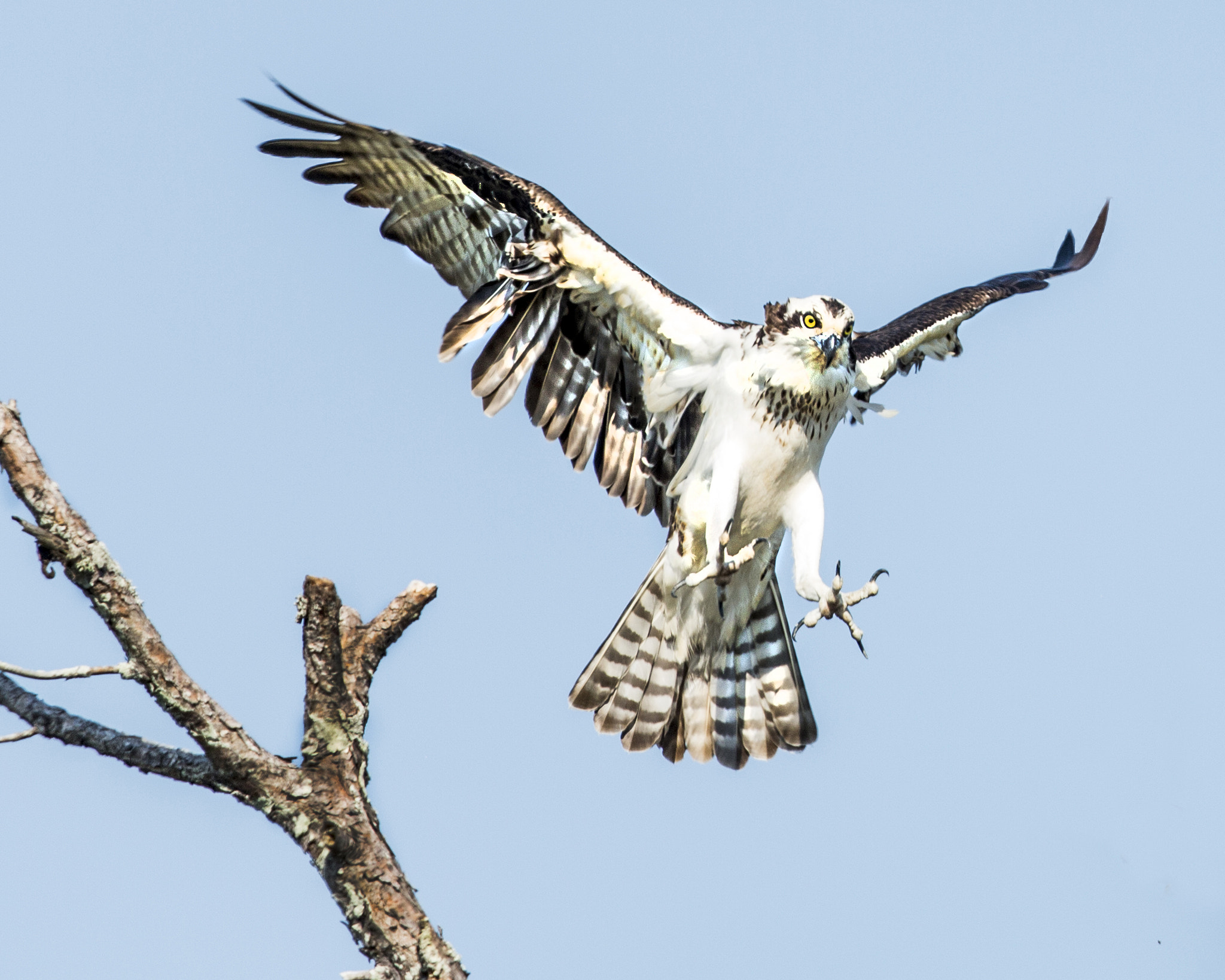 Photograph EIGHT POINT LANDING !! by Dale Lorenzen on 500px