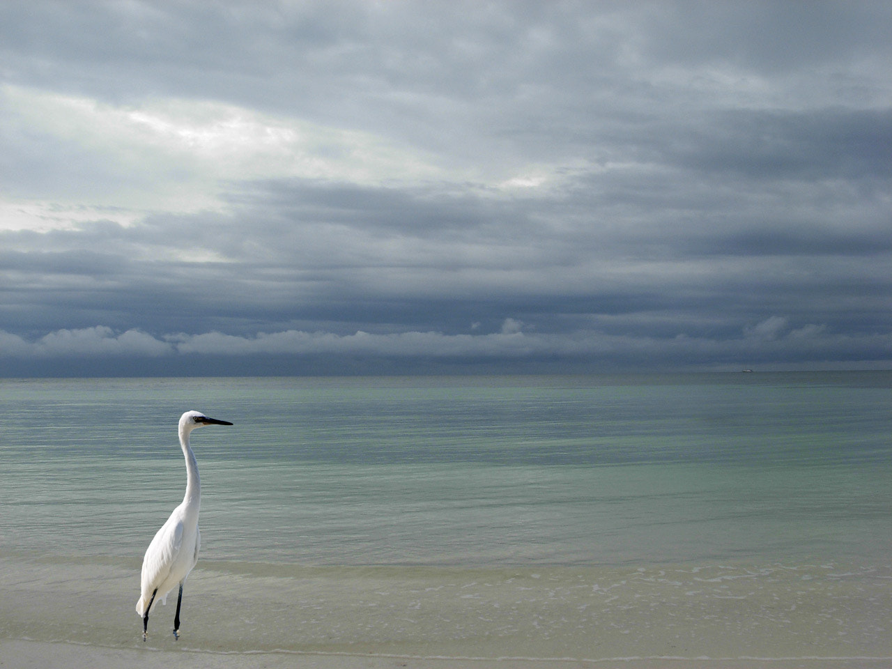 Photograph Great Egret at the beach by Pat Burns on 500px