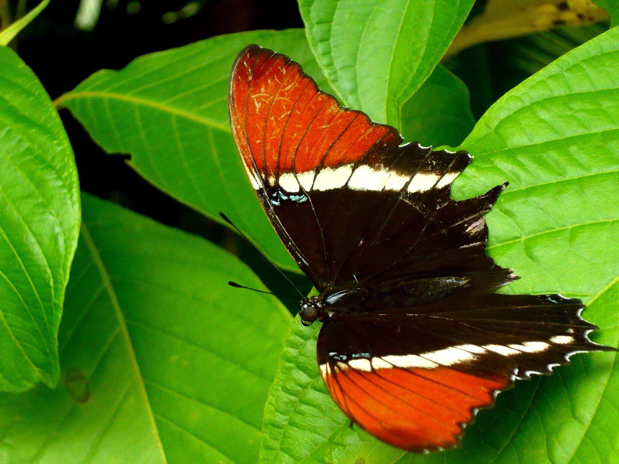 Photograph MARIPOSA by yeslith hurtado on 500px