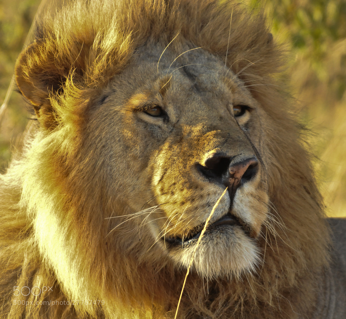 Photograph The king by Adam Neal on 500px
