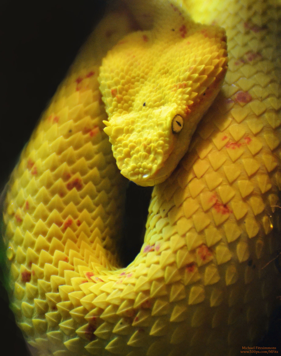 Photograph Viper by Michael Fitzsimmons on 500px