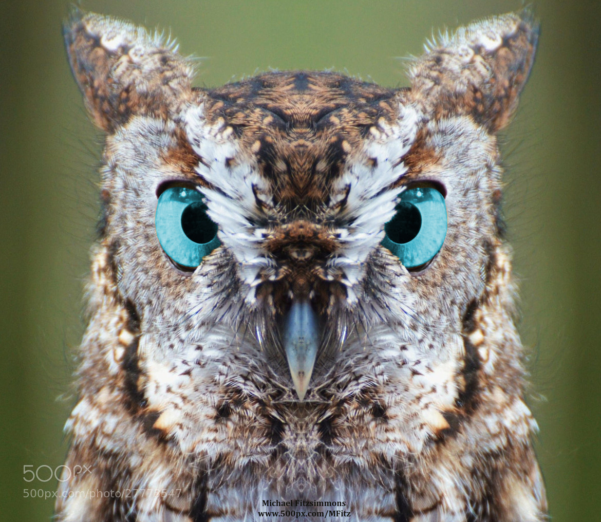 Photograph Ol' Blue Eyes by Michael Fitzsimmons on 500px