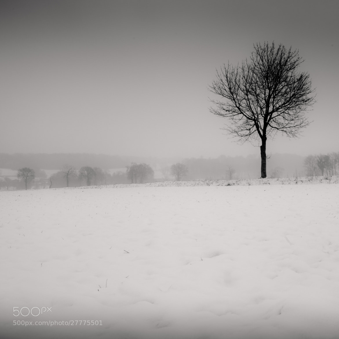 Photograph One tree by Olivier Bergeron on 500px