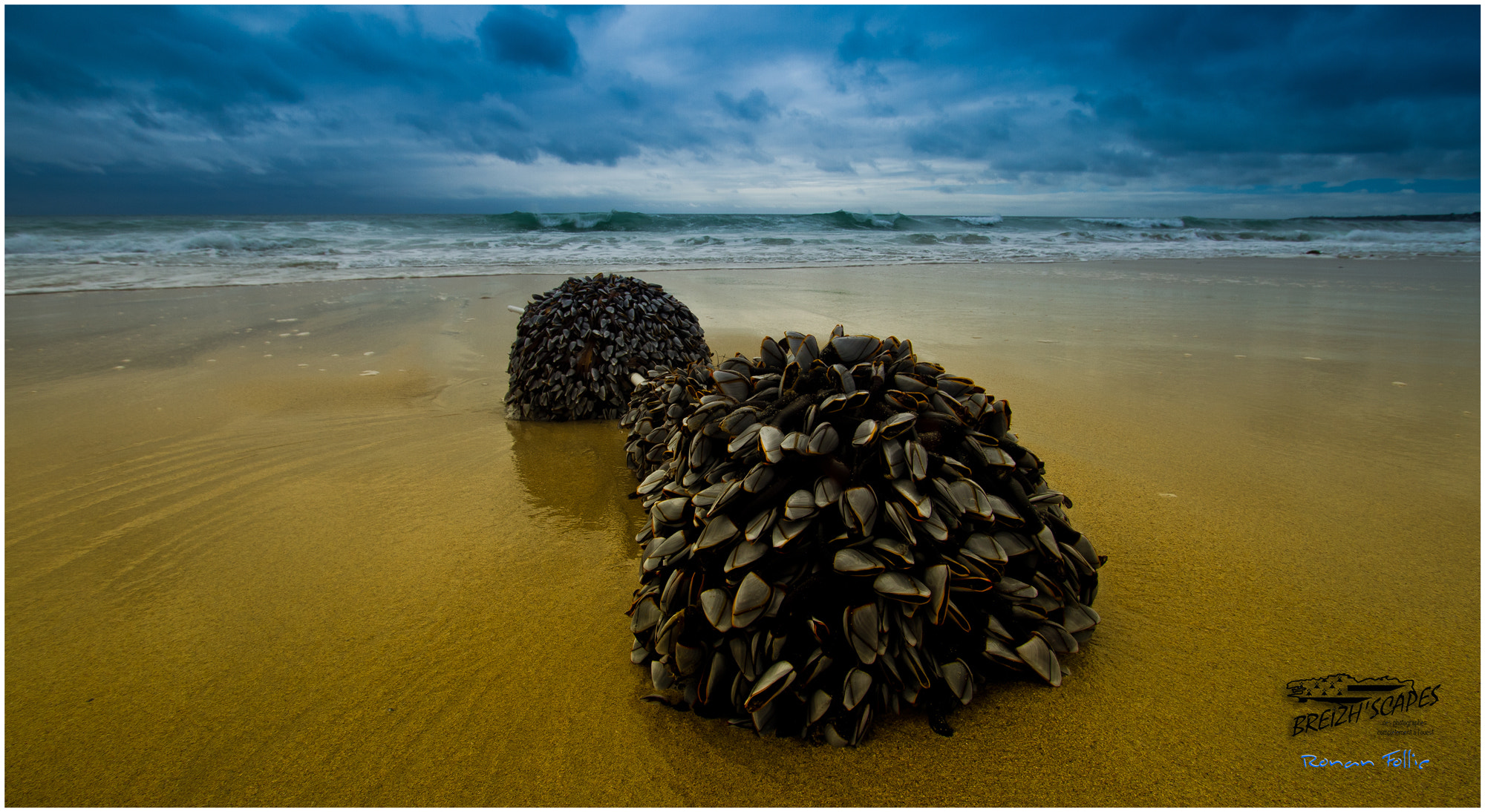 Photograph Moules fraiches by Breizh'scapes Photographes on 500px