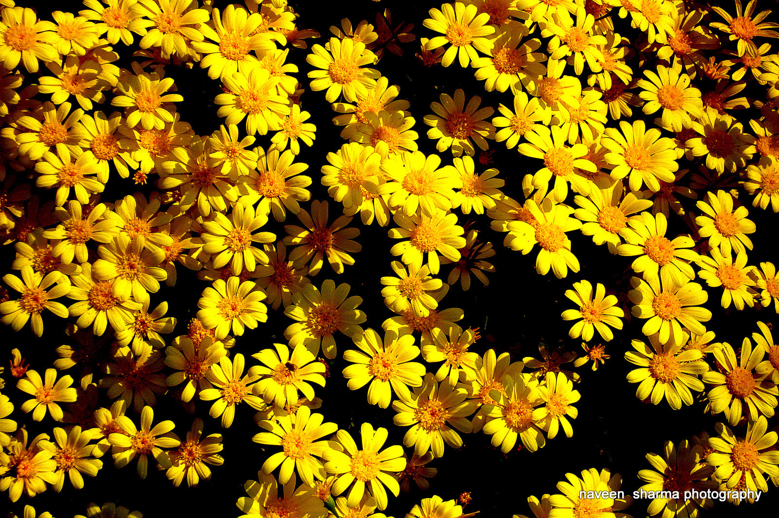 Photograph Yellow world by naveen sharma on 500px