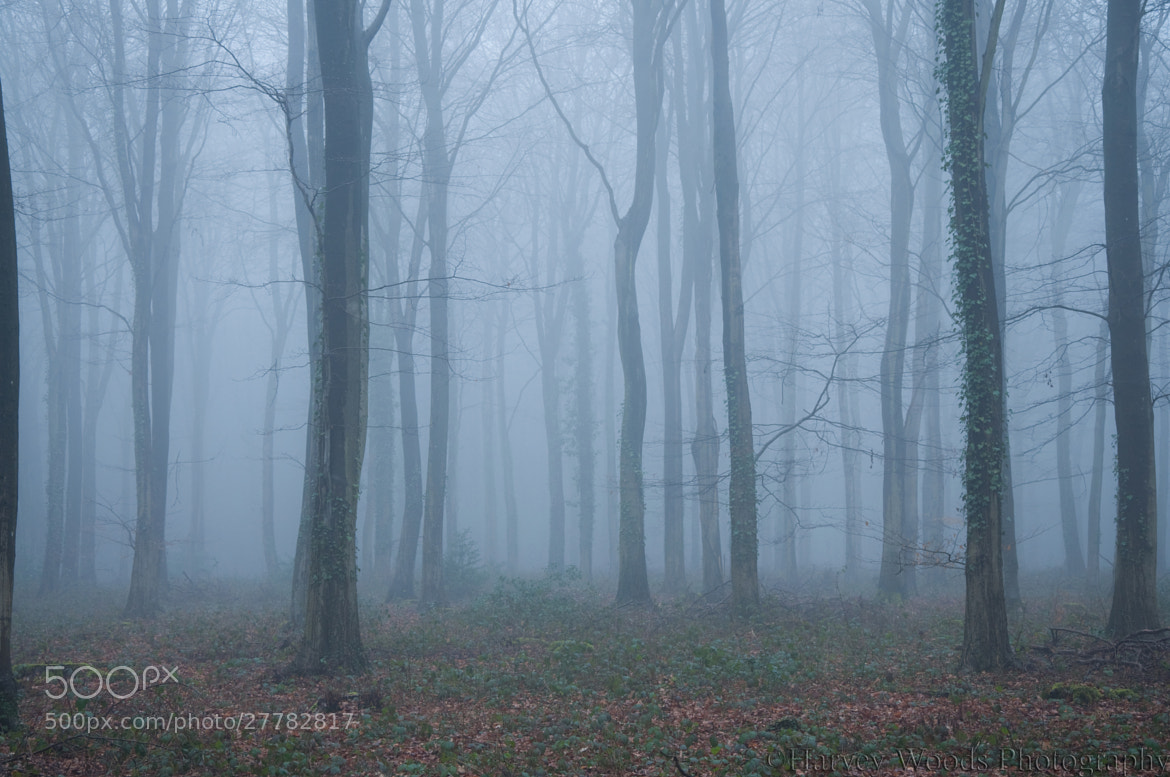 Photograph The Evening Mist by Harvey Woods on 500px