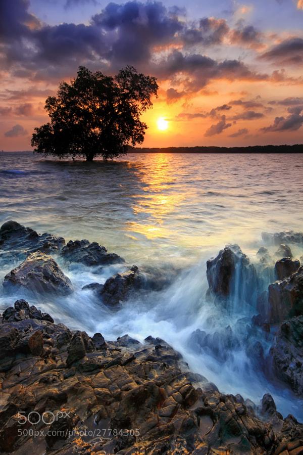 Photograph .:: Motion & Tree ::. by Danis Suma Wijaya on 500px