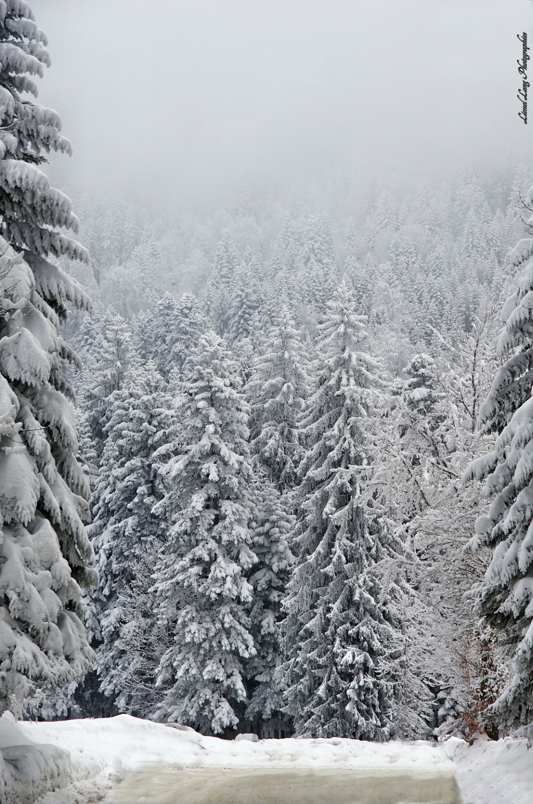 Photograph Fir trees - Les sapins by Lionel Lang on 500px