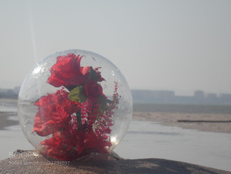 Photograph sea rose  by Javid Mushfigoglu on 500px