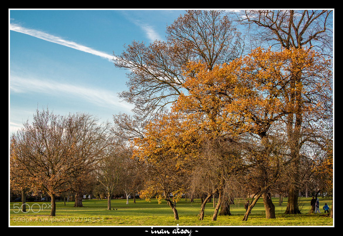 Photograph Autumn at The Valentines Park by Inan Aksoy on 500px