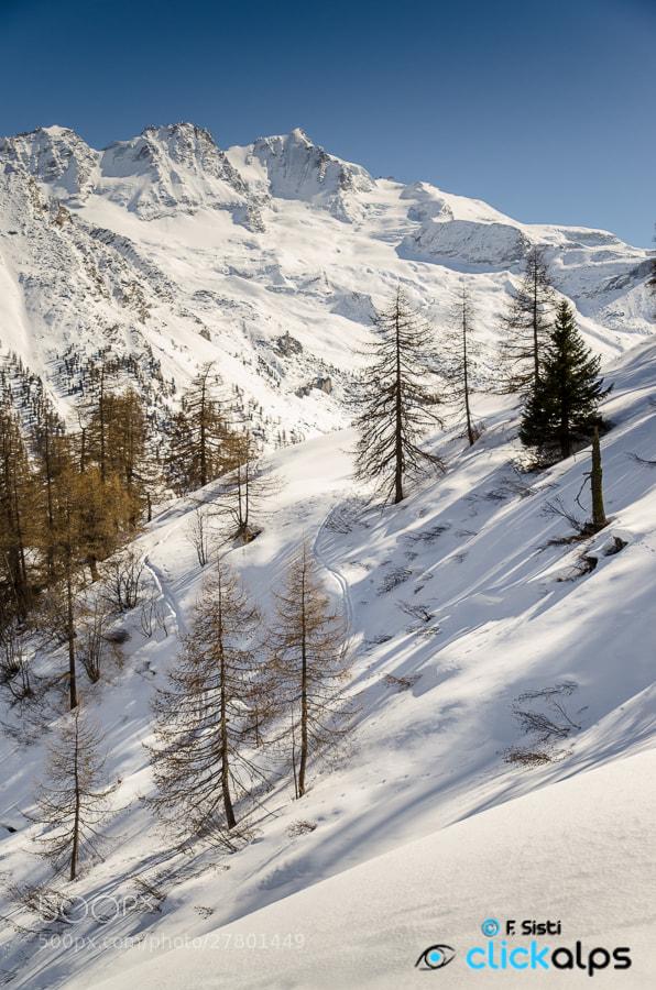 Photograph Let your soul be your pilot... (Valsavarenche, Parco Nazionale Gran Paradiso, Valle d'Aosta) by Francesco Sisti on 500px