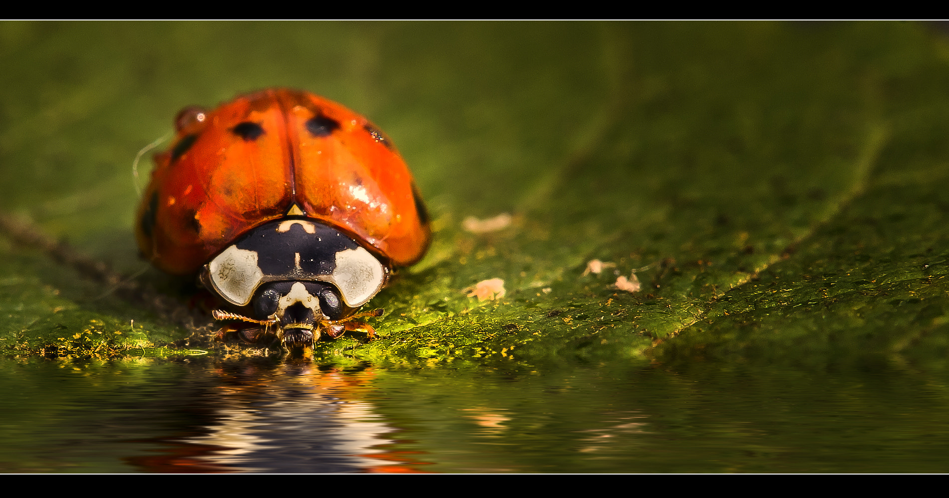 Photograph thirst by Detlef Knapp on 500px