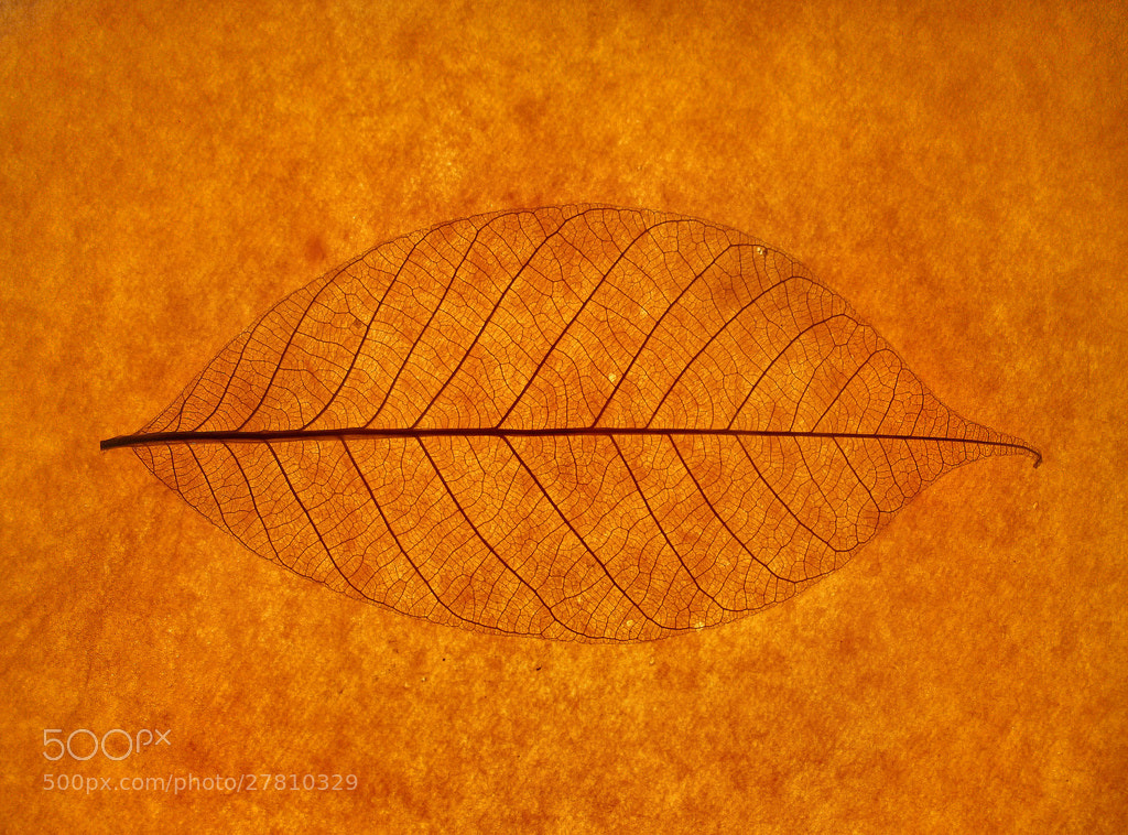 Photograph leaf on paper by Mister Mark  on 500px