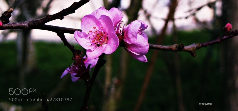 Photograph cor de rosa bébé by Filipa Santos on 500px