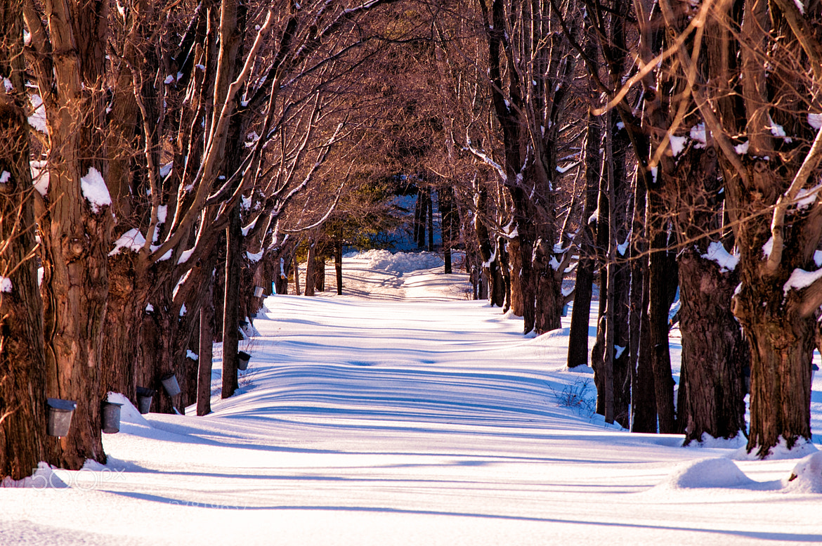 Photograph Snow covered way by Lee Costa on 500px