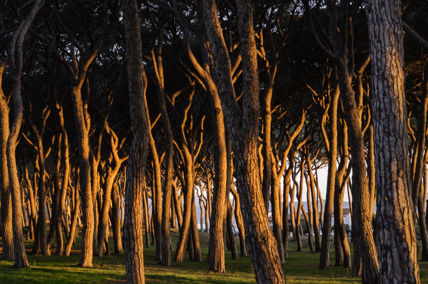 Photograph Light on the trees by Daniele Sangiorgio on 500px