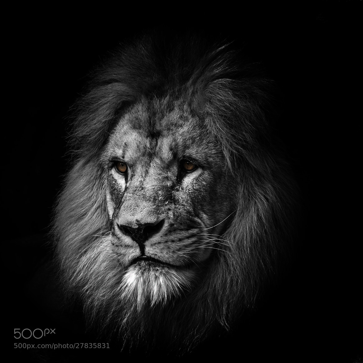 Photograph King portait by Bart Mozer on 500px