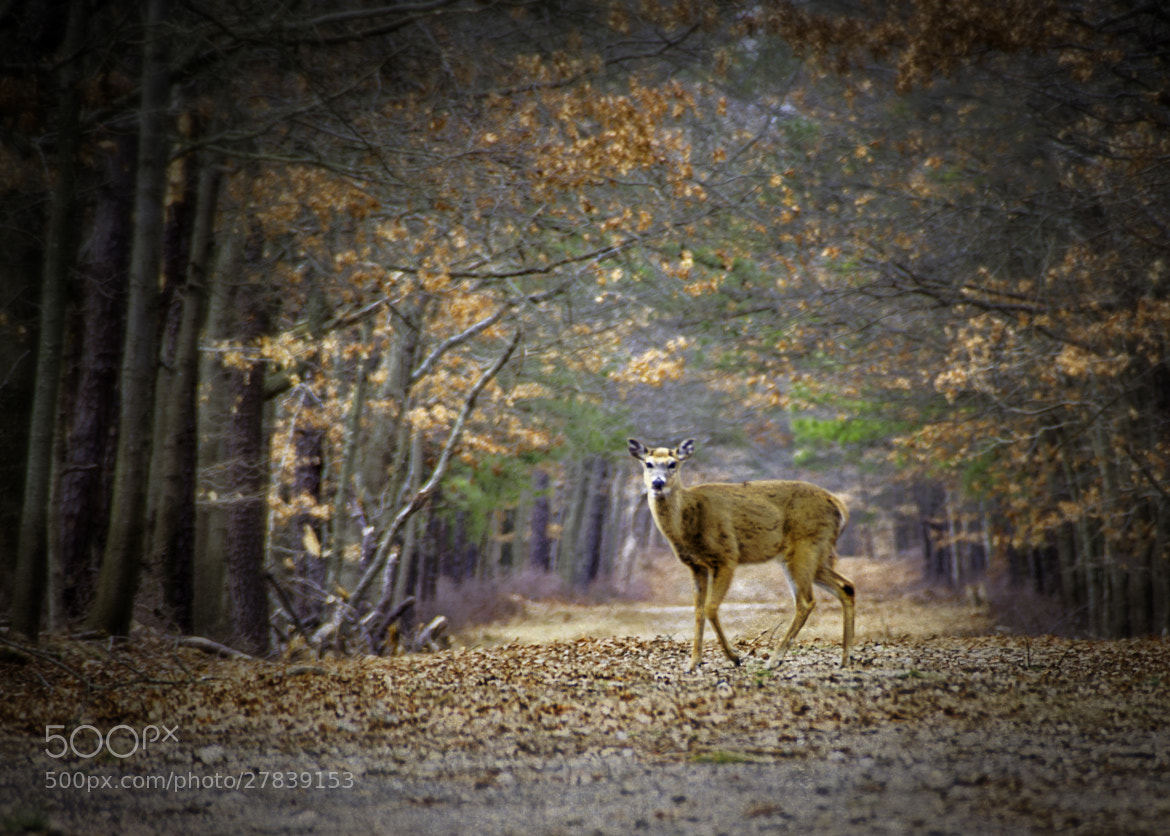 Photograph Deer Path by Vicki Jauron on 500px