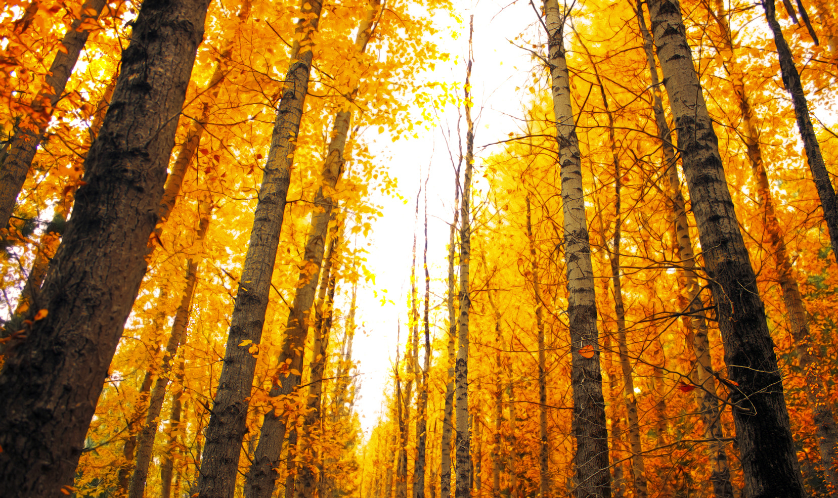 Photograph Autumn Is On Its Way || THE YELLOW FOREST by Rhys Pope on 500px