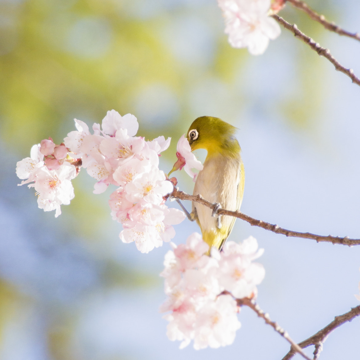 Photograph The biginning of spring by Takeshi Marumoto on 500px