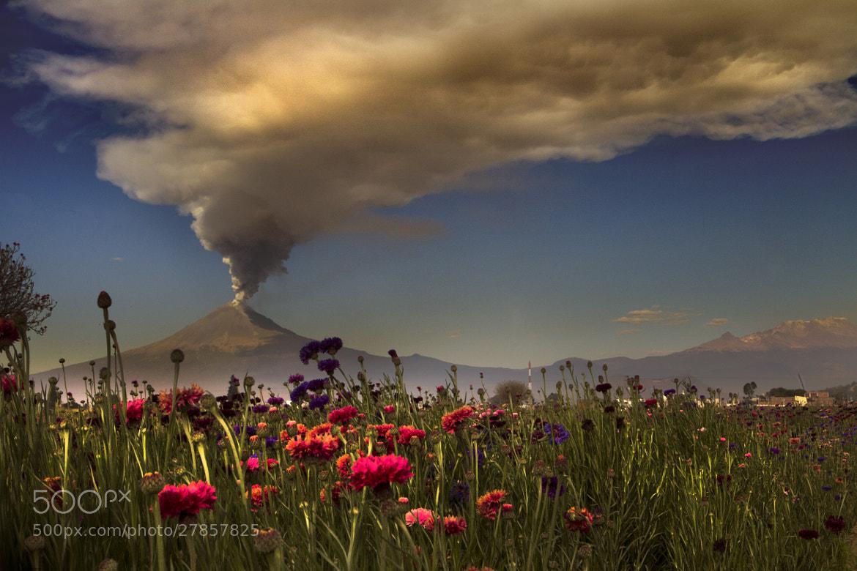 Photograph field flowers and smoking volcano by Cristobal Garciaferro Rubio on 500px