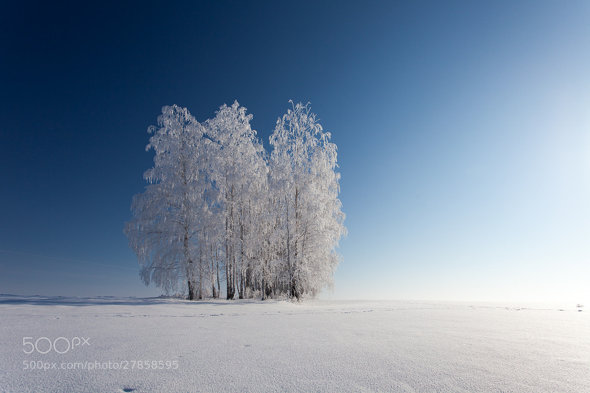 Photograph Frozen Strings by Denis Belyaev on 500px