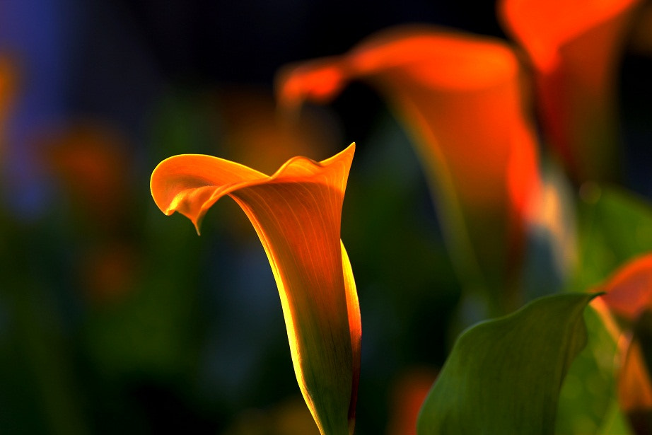 Photograph Flower18 by Zhu xiao ping on 500px