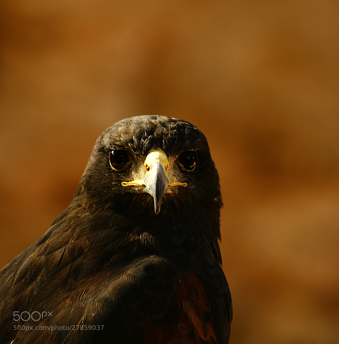 Photograph look at me by joaocarlo   on 500px