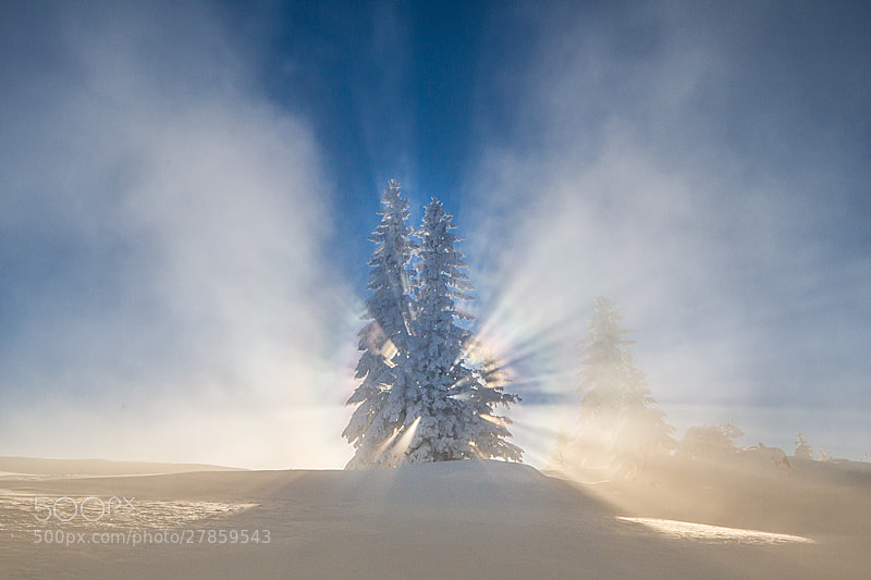 Photograph Sun from pine by Igor Isanovic on 500px