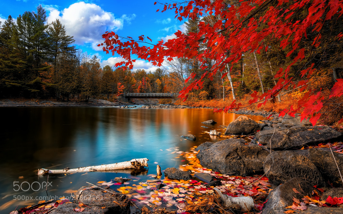 Photograph Fall in Oxtongue Rapids by Brian Ngo on 500px