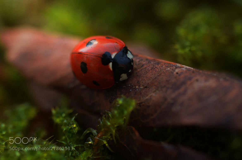Photograph sleeping ladybug by Julia Kaufmann on 500px