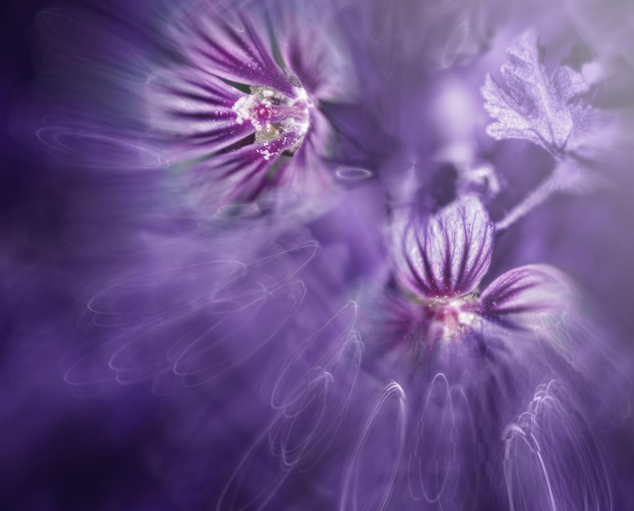 Photograph ::: Violet Photosynthesis ::: by Josep Sumalla on 500px