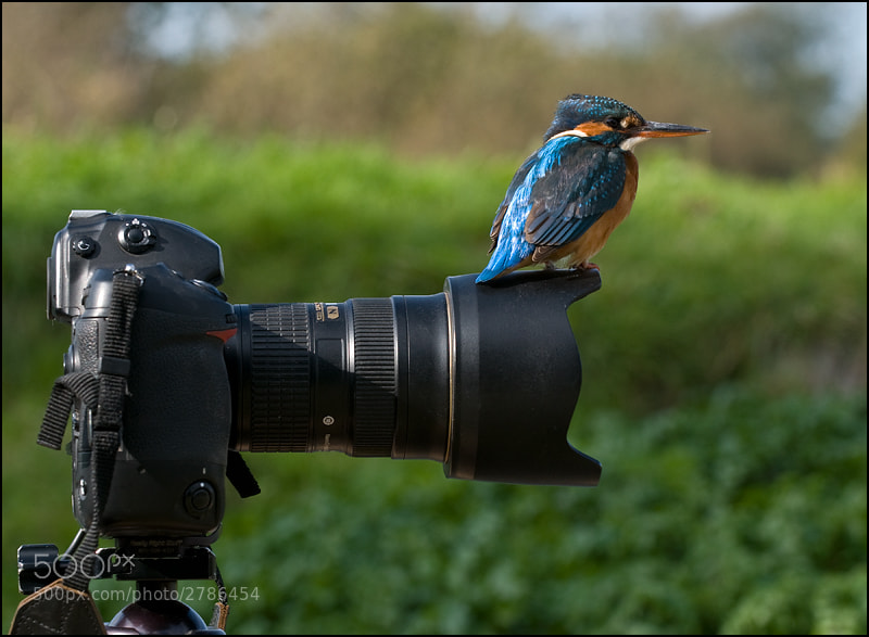 Photograph Watch The Birdie 2 by Tony Flashman on 500px