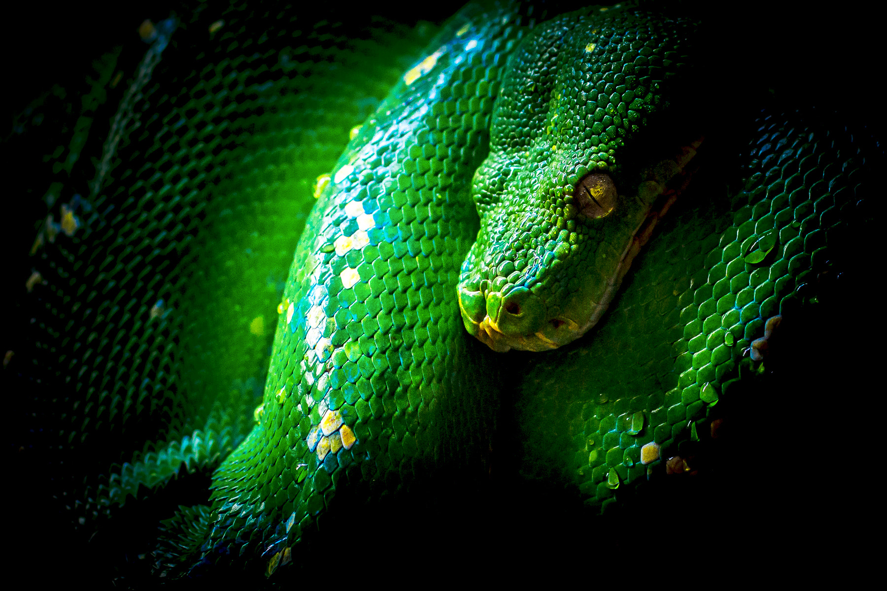 Photograph Green Snake by Donato Romagnuolo on 500px