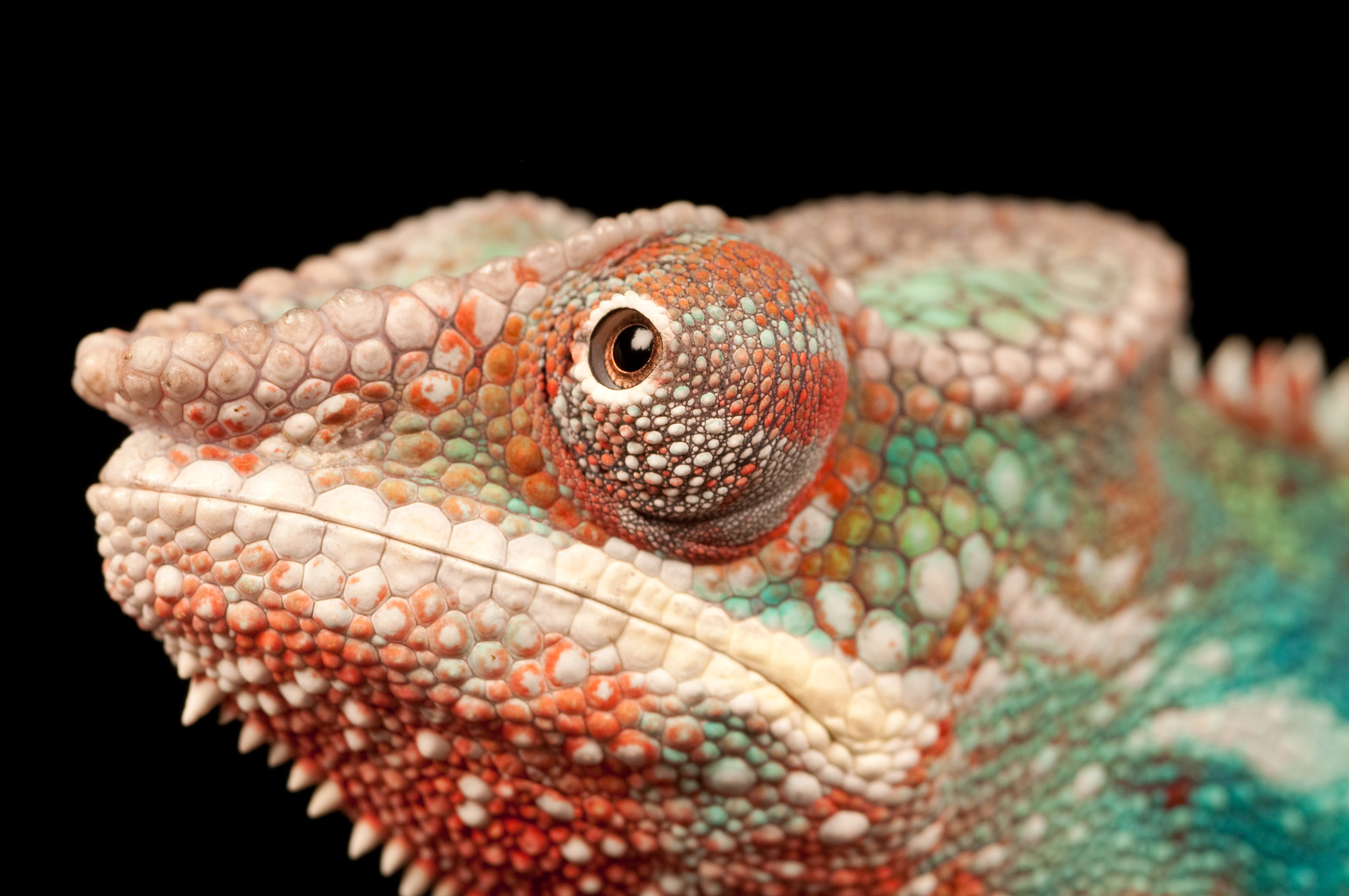 Photograph Colour Chameleon 2 by Harvey Woods on 500px
